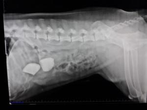 Figura 1. Radiografía lateral de abdomen de Kira