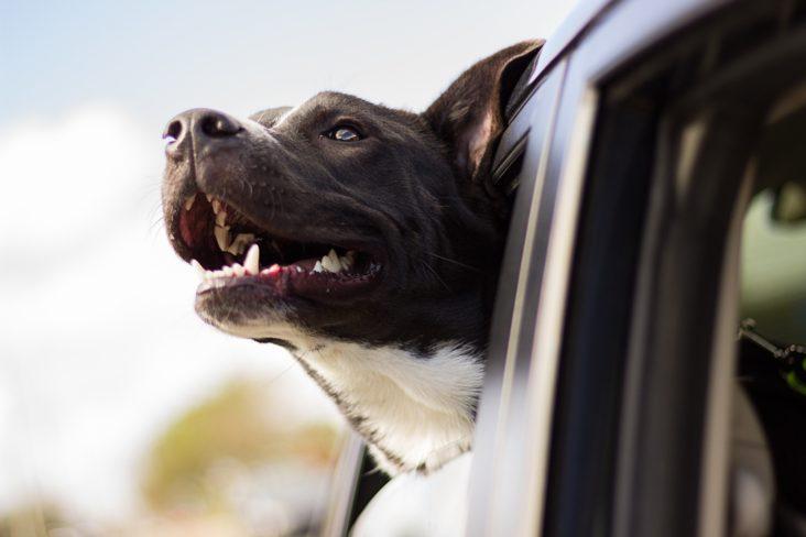 Perro coche veterimovil